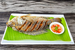 Fried tilapia fish. With spicy sauce royalty free stock photos