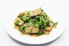Fried Tofu With Baby Sunflower Photos stock