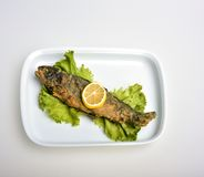Fried trout fish. With lemon and lettuce Stock Image