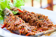 Fried whisker sheat fish with chili sauce. Close-up fried whisker sheat fish with chili sauce, or chili sauce on fried fish on white dish, Thai food royalty free stock image