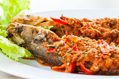 Fried whisker sheat fish with chili sauce. Close-up fried whisker sheat fish with chili sauce, or chili sauce on fried fish on white dish, Thai food royalty free stock images