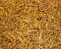 Fried worm background Royalty Free Stock Photo
