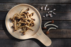 Fried yanagi mushroom with oyster sauce. On wood plate Royalty Free Stock Photos