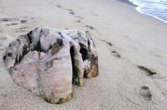 Frieden des Holzes der interessanten Form und der Farbe begraben im Sand Stockbilder