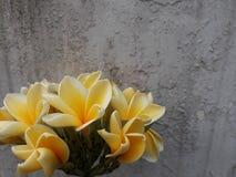 Frieden im Gelb Lizenzfreie Stockfotografie
