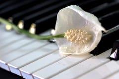 Frieden Lily Flower auf Tastatur lizenzfreie stockbilder
