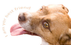 Friend. The dog, man's best friend royalty free stock image
