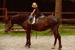 Friend, companion, friendship. Girl ride on horse on summer day. Equine therapy, recreation concept. Child smile in rider saddle on animal back. Sport stock photos