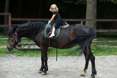 Friend, companion, friendship. Girl ride on horse on summer day. Equine therapy, recreation concept. Child smile in rider saddle on animal back. Sport stock photo