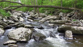 Friend's Creek Waterfalls in May stock video