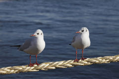 Friend of a sea gull Stock Images