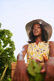 Friendly african american woman harvesting fresh vegetables from the rooftop greenhouse garden Stock Images