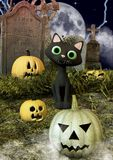 A friendly black cat in a cemetery surrounds by Halloween pumpkins. stock images