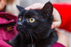 Friendly black cat Stock Image