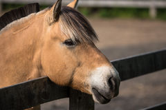 Friendly brown horse portrait Stock Photos