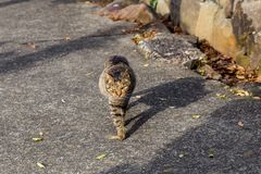 A friendly cat walks down the road stock images