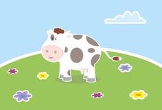 Friendly cow  Stock Photos