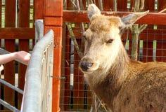 Friendly deer Stock Photos