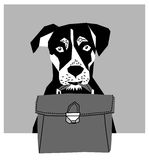 Friendly dog with business case grayscale. Stock Image