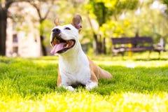 Friendly dog smile Stock Photos