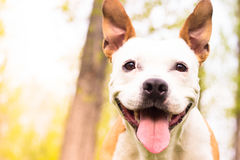 Friendly dog smile Royalty Free Stock Images