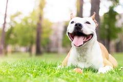 Friendly dog smile Stock Images