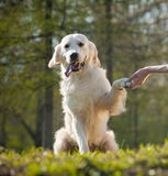 Friendly dog Stock Images
