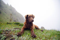 Friendly dog. A friendly stray dog up in the mountains. Ciucas Mountains, Romania Royalty Free Stock Photo