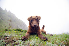 Friendly dog. A friendly stray dog up in the mountains. Ciucas Mountains, Romania Stock Photography