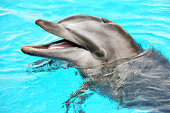 Friendly dolphin Stock Photos