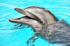 Friendly dolphin Stock Photos