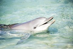 Friendly dolphin saying hello Stock Images