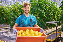 Friendly farmer at work in greenhouse. Royalty Free Stock Photo