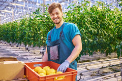 Friendly farmer at work in greenhouse. Stock Photo