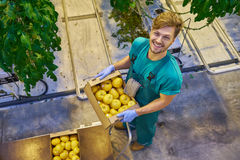 Friendly farmer at work in greenhouse. Royalty Free Stock Photos