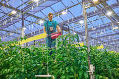Friendly farmer working on hydraulic scissors lift platform in g. Reenhouse Stock Photo