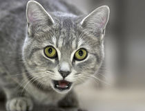 Friendly Feline Royalty Free Stock Photos
