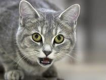Friendly Feline Royalty Free Stock Photos