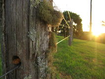 Free Friendly Fence Stock Photography - 595502