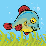 Friendly Fish Stock Photography