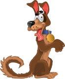 Friendly fun dog royalty free stock image