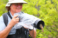 Friendly Galapagos flycatcher sitting on a lens hood, Santiago I Royalty Free Stock Photography
