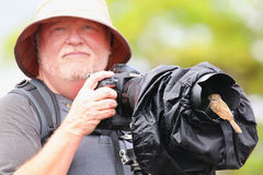 Friendly Galapagos flycatcher sitting on a lens hood, Santiago I Stock Photography