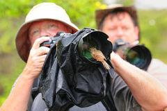Friendly Galapagos flycatcher sitting on a lens hood, Santiago I Stock Images