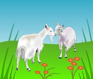 Friendly Goats. Two goats who greet each other in a Royalty Free Stock Photography