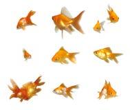Friendly Goldfishes Set. Many friendly beautiful goldfishes isolated on white background (can be used individually stock photos