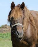Friendly horse Royalty Free Stock Photo