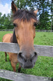 Friendly Horse Portrait Royalty Free Stock Photography