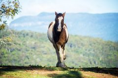 Friendly horse saying hello Royalty Free Stock Photos