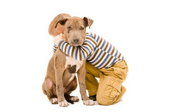 Friendly hugs the boy and puppy. Portrait of a boy hugging a puppy pitbull Stock Photos